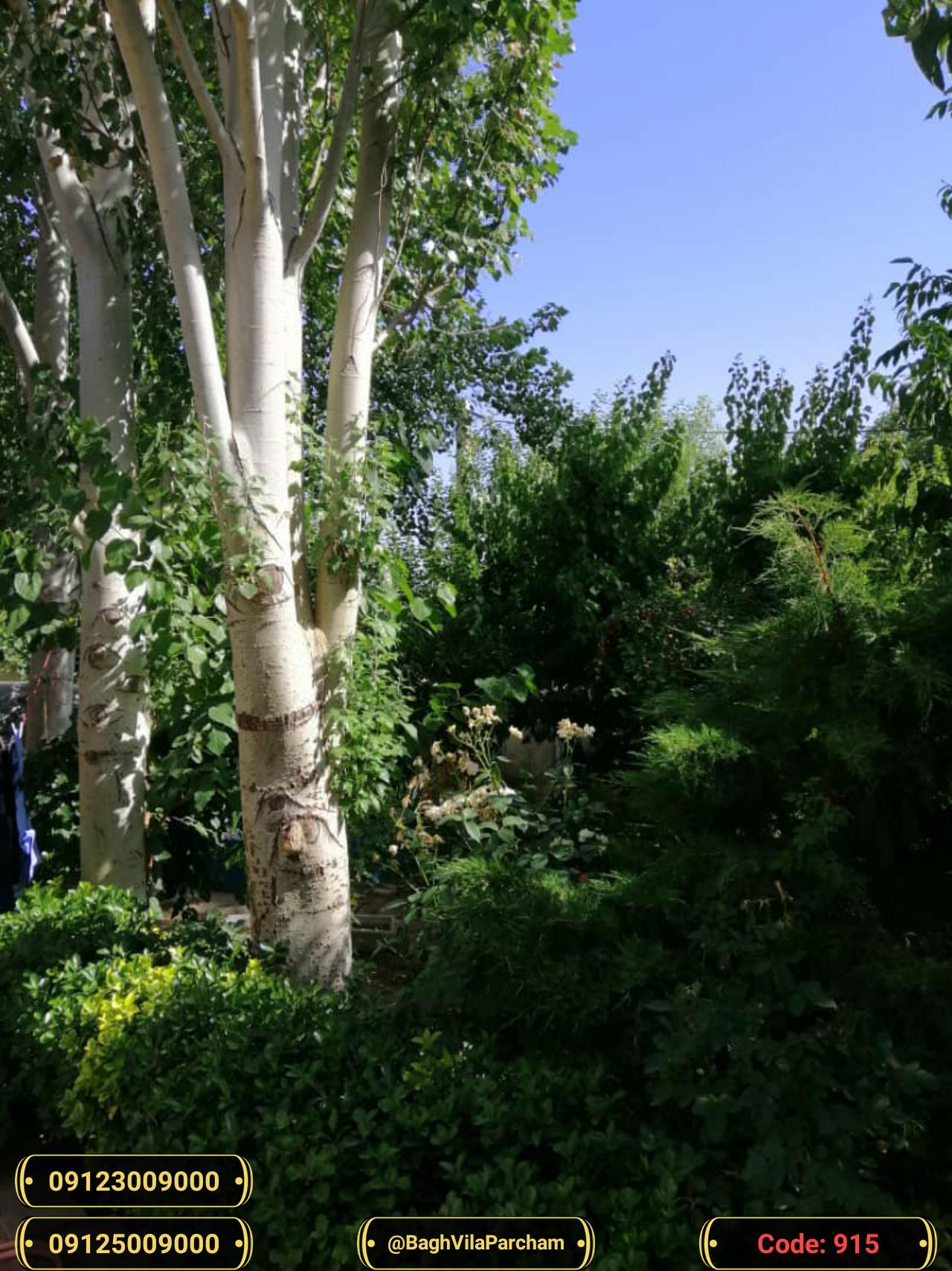 تصویر عکس باغ ویلا شماره 17 از ویلای ۵۶۵۰ متر ویلا کلاسیک تریبلکس Picture photo image 17 of ۵۶۵۰ متر ویلا کلاسیک تریبلکس