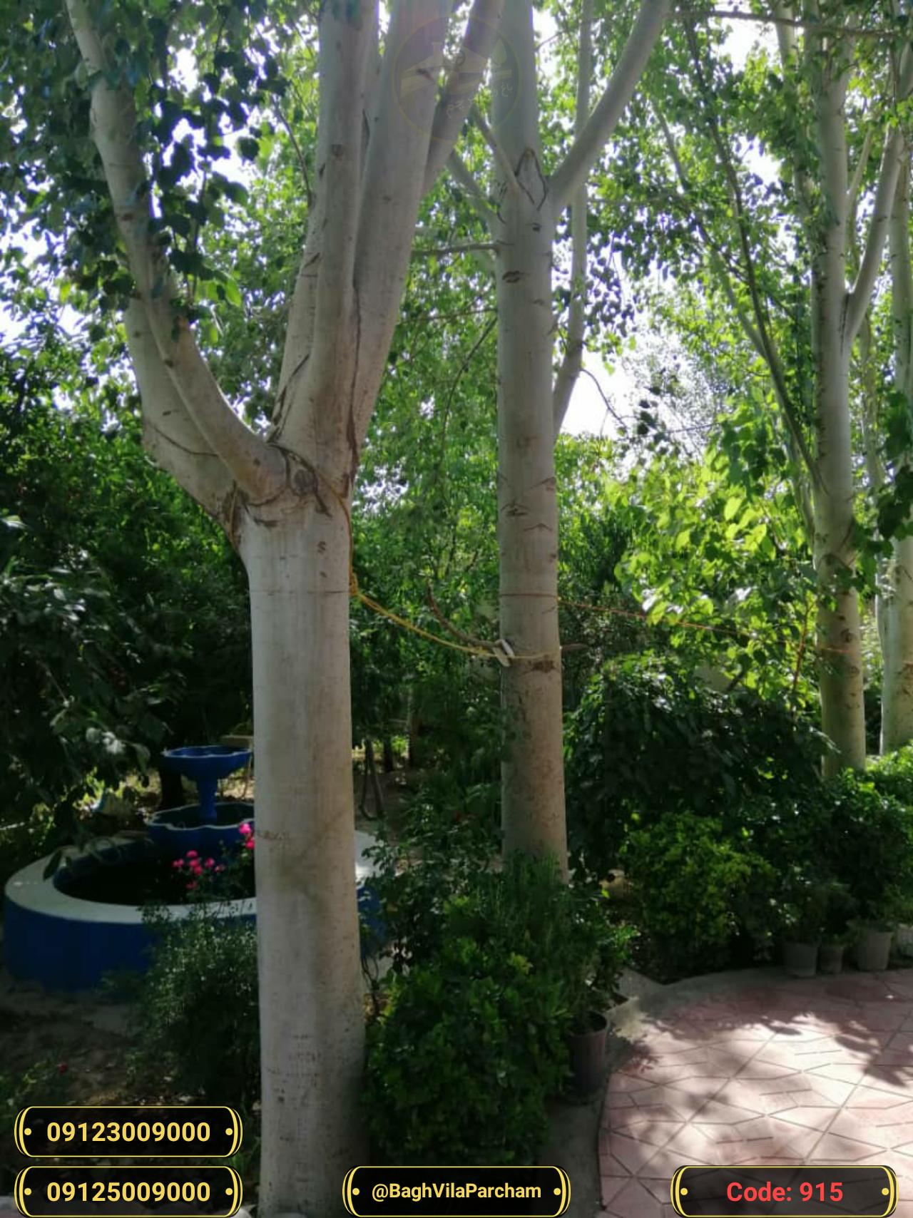 تصویر عکس باغ ویلا شماره 14 از ویلای ۵۶۵۰ متر ویلا کلاسیک تریبلکس Picture photo image 14 of ۵۶۵۰ متر ویلا کلاسیک تریبلکس